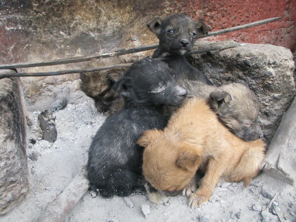 Puppies crowd where the fire was to stay warm